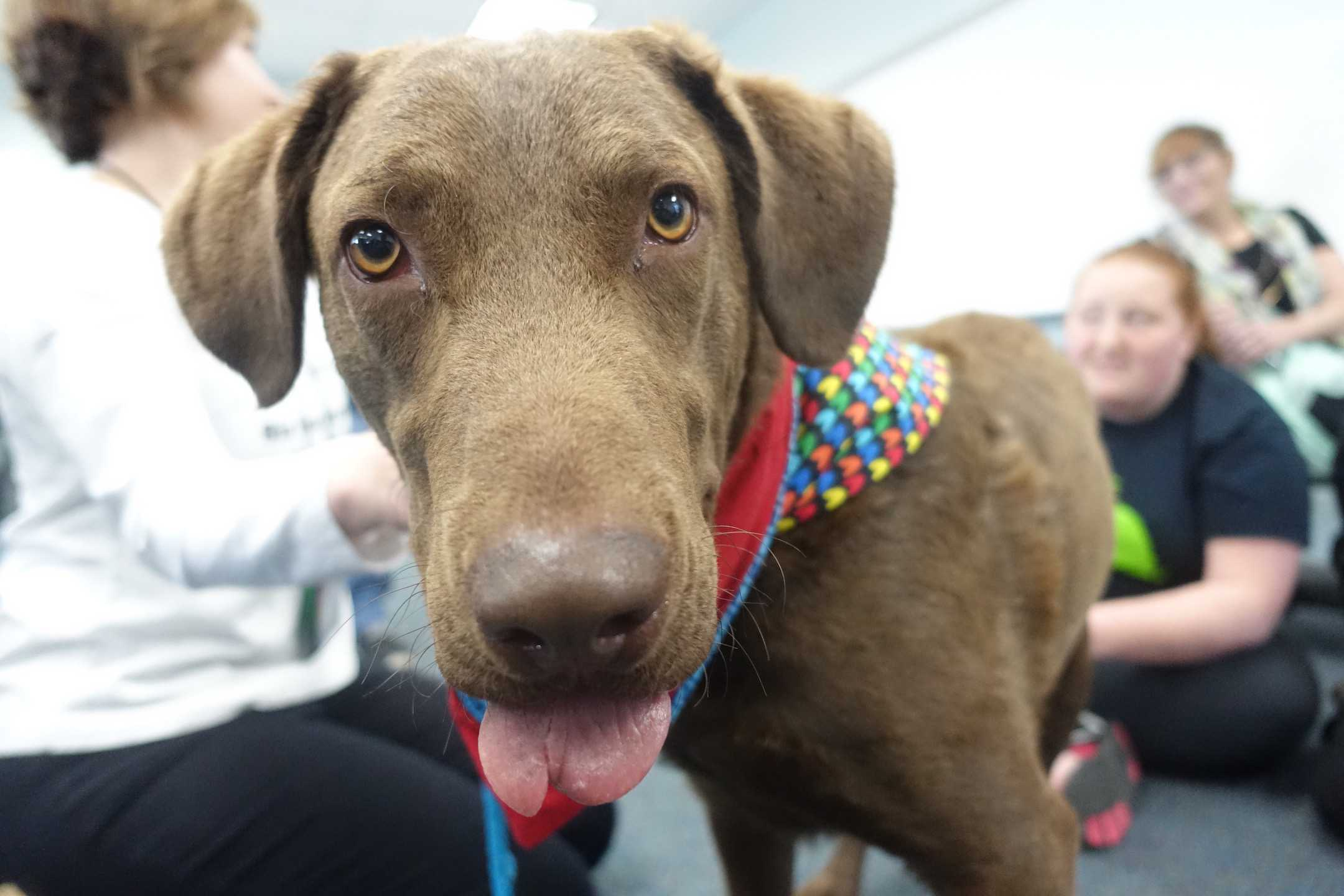 Therapy Dogs Assist with Stress Relief Week