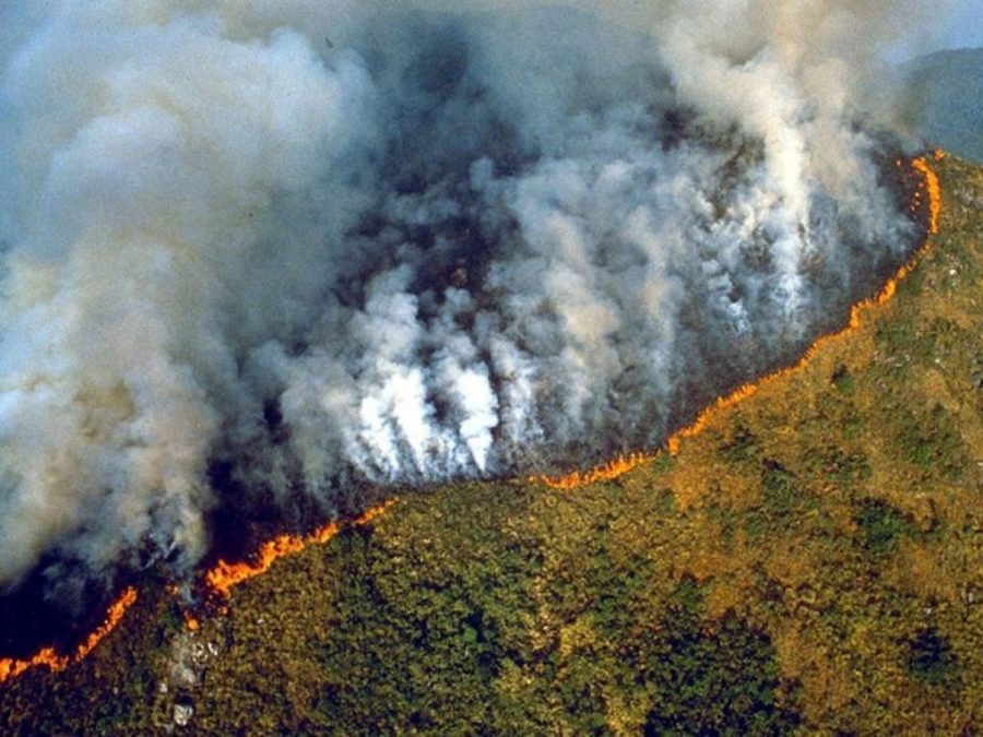 The Amazon Rainforest is Burning, But Is That Good or Bad?